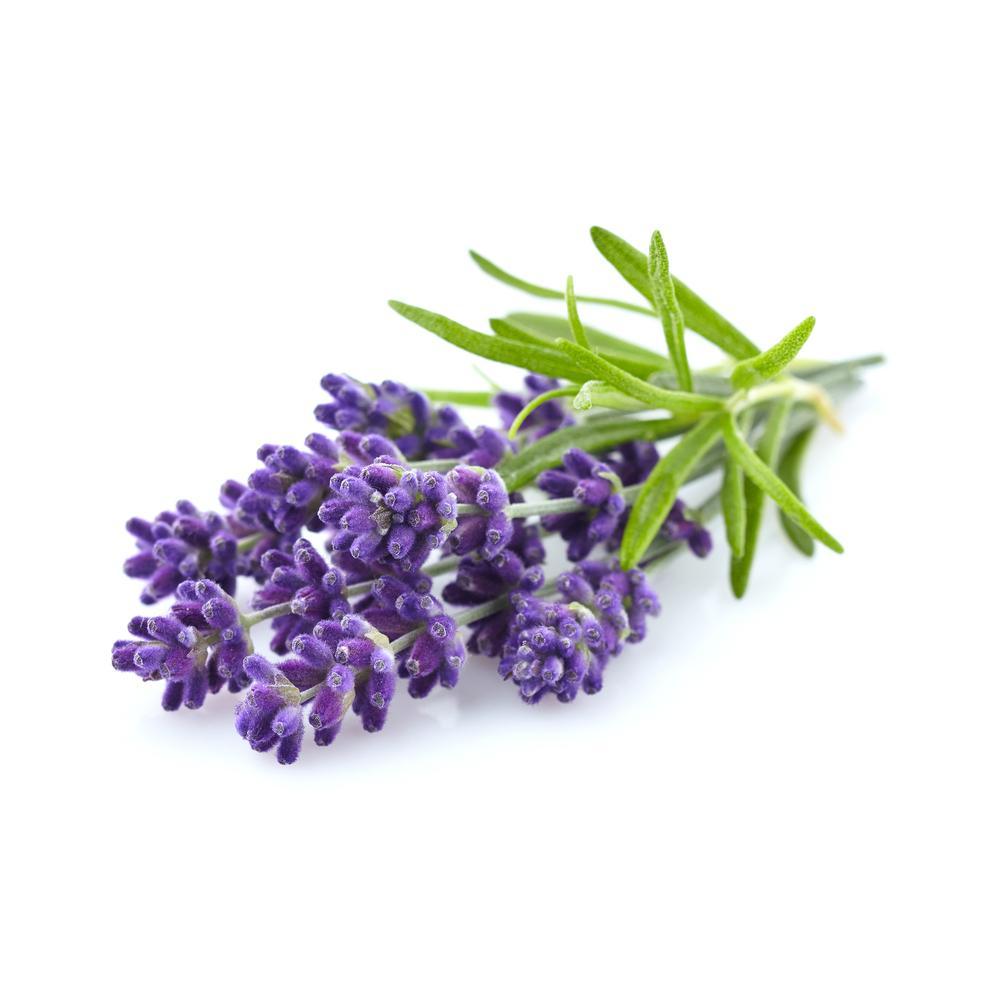 Lavendel kweken in de moestuinbak