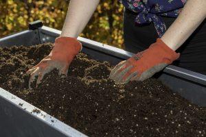 Planten in jouw moestuinbak
