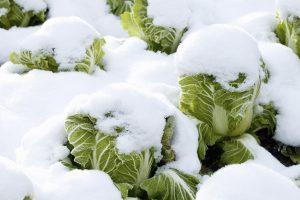 Groenten in de winter